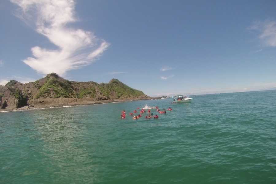Uvita Information Center Whale and Dolphin Watching Tour with Fragata Tours
