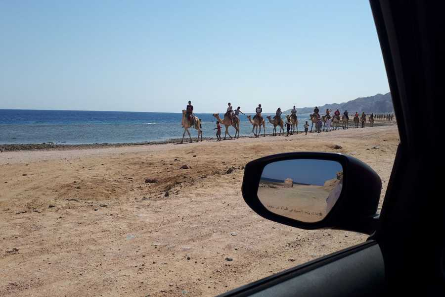 EMO TOURS EGYPT Camel Ride, Snorkeling  At Blue Holl From Dahab