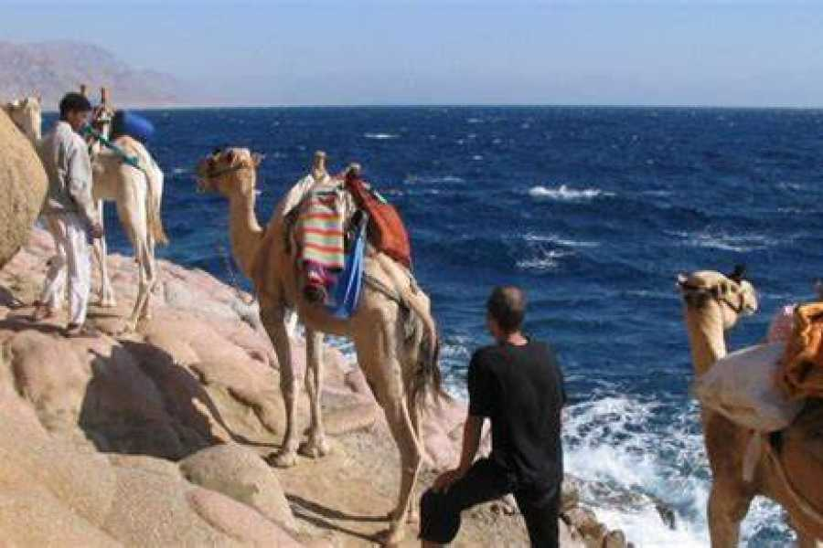 EMO TOURS EGYPT Private Day Tour To Blue Lagoon And Ras Abu Galum From Dahab