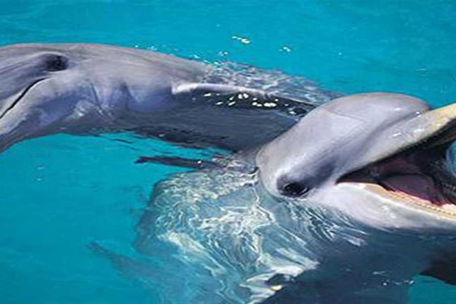 EMO TOURS EGYPT Swimming with Dolphins, Snorkeling Tour From Marsa Alam
