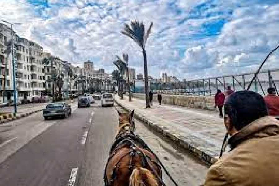 EMO TOURS EGYPT Alexandria By Night Private Tour By Horse Carriage ride And Free Walking Tour