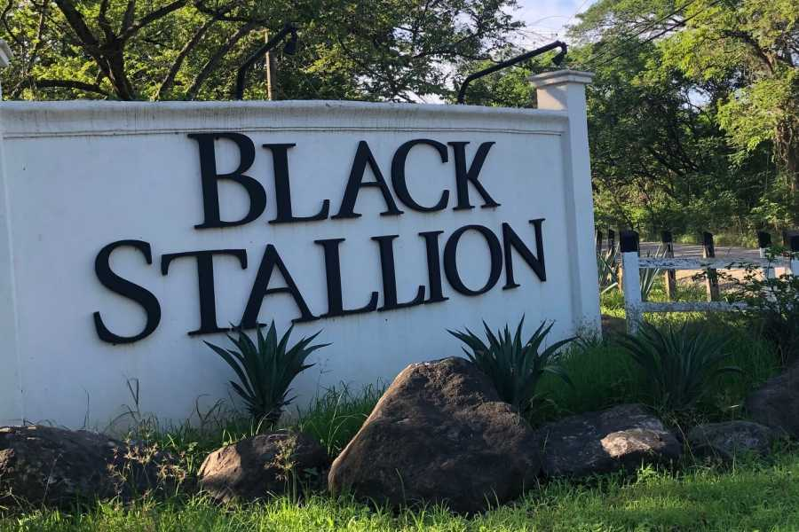 Black stallion ranch ZIP & PURA VIDA Lunch
