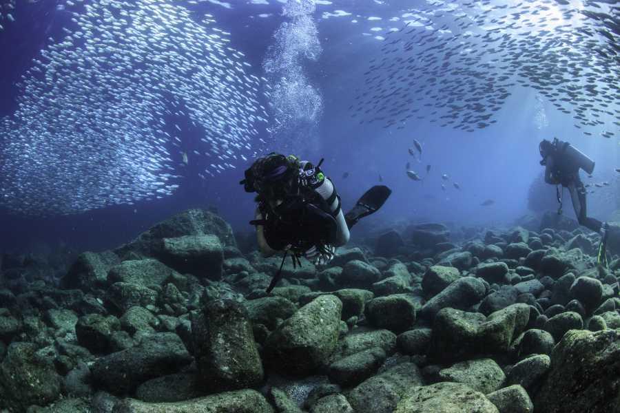 Pacifico Tours SA de CV La Paz Scuba Diving