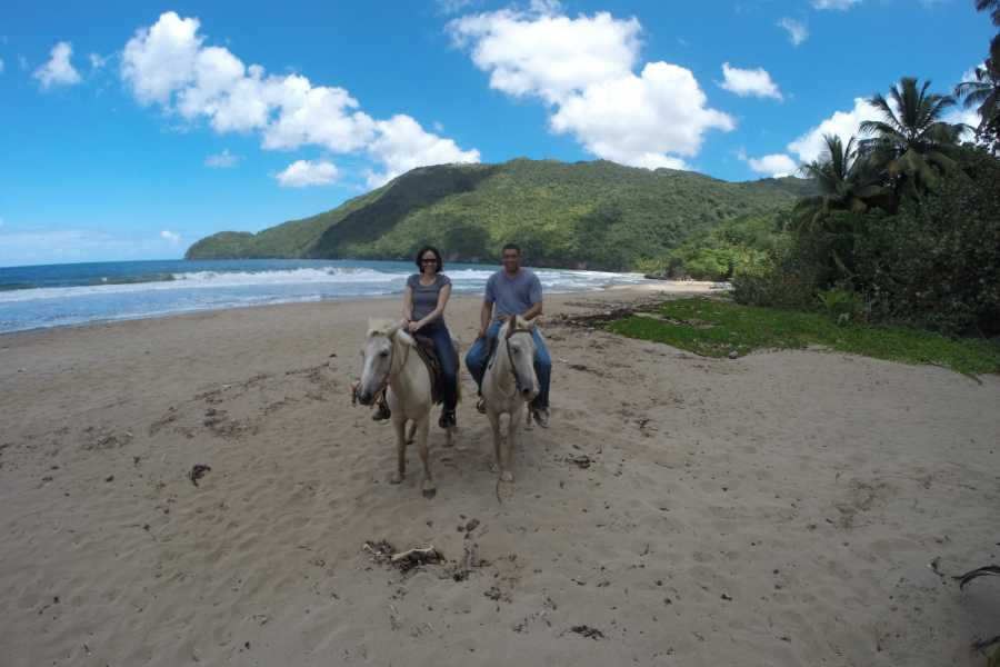 "Tour Samana With Terry Shore Excursion #6 - Culture, Beach & Waterfalls on Horseback - ""The Real Dominican Republic"""