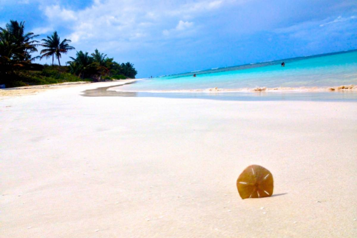 Blue Waters Caribbean Adventures Culebra Day Trip