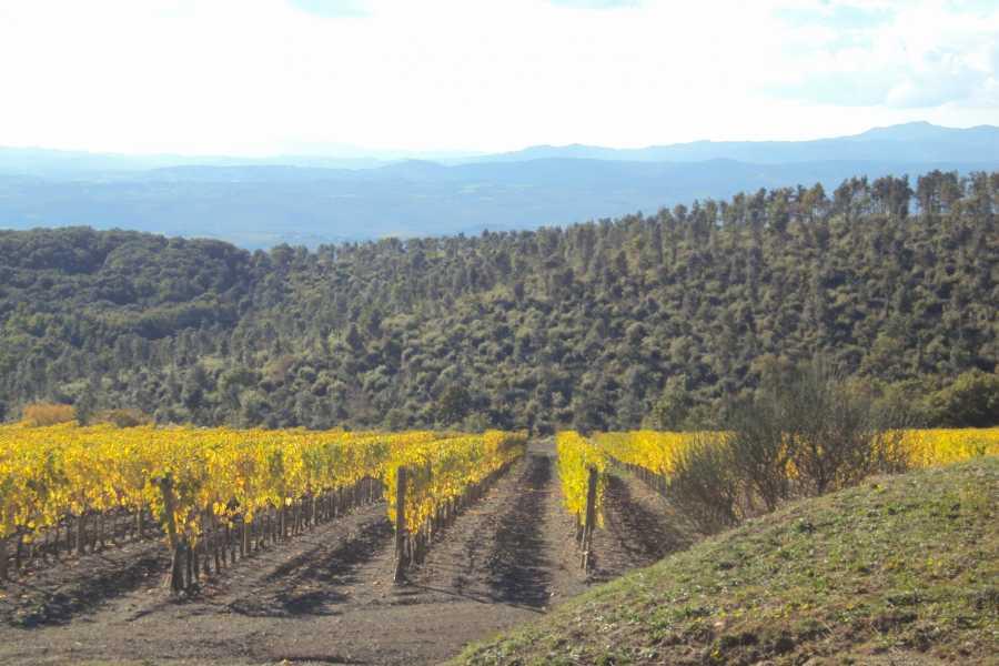 Tuscanmagic Di Dng srl Fd 'Tuscan Wine Tour'