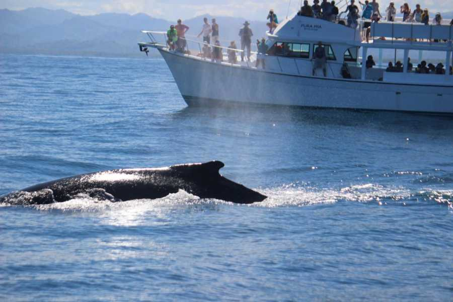 Tour Samana With Terry HOTEL EXCURSION #4a: Whales Tour with Famous Kim Beddall of Whale Samana