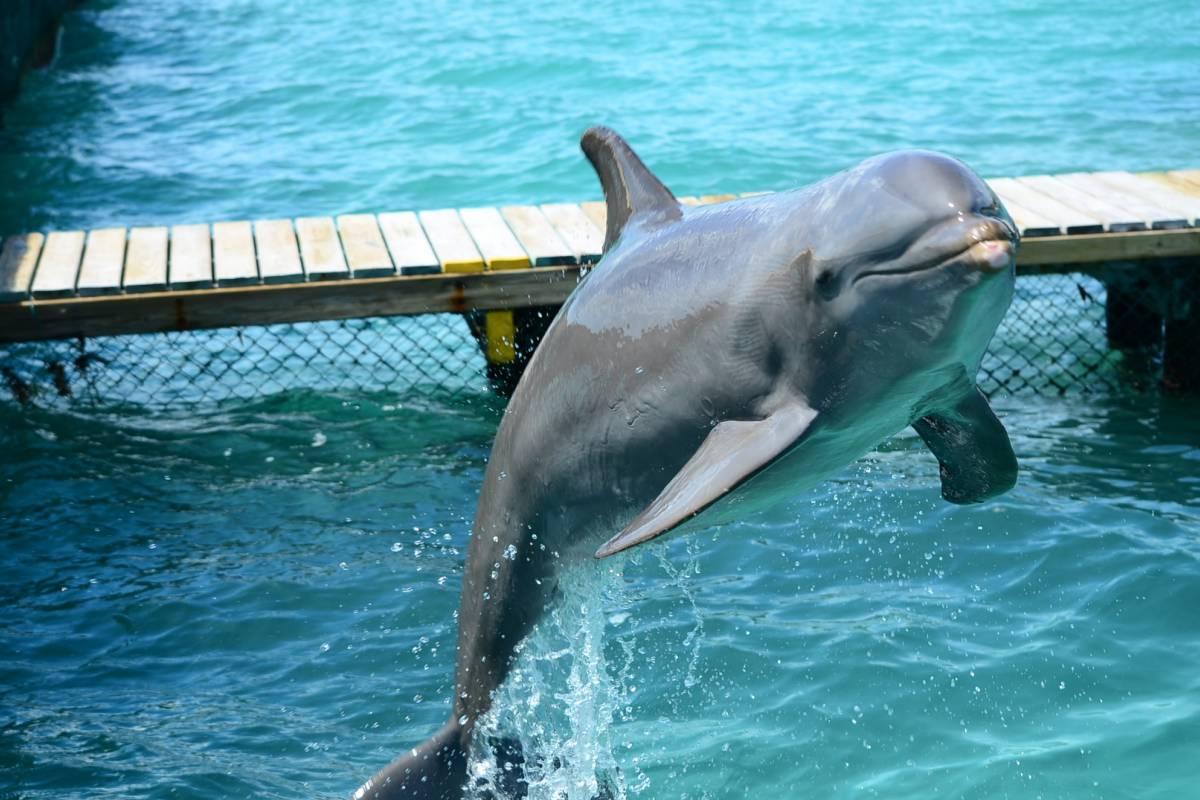Aqua Mania Adventures TANGO DOLPHIN DISCOVERY