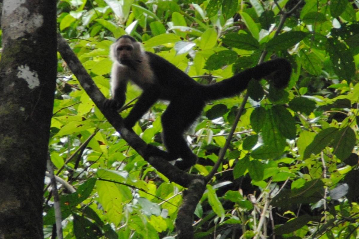 Cacique Cruiser Monkey Island & Embera Tour