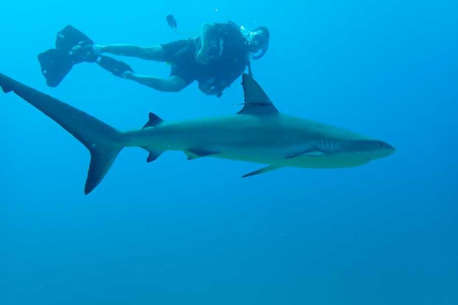 Aqua Mania Adventures 02. SCUBA SINGLE DIVE (1 dive) for Certified Divers