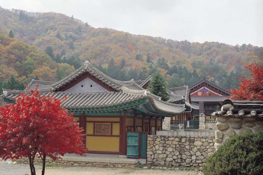 Kim's Travel Buddhist Temple Stay Tour (2D1N)