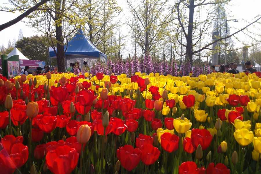 Kim's Travel International Horticulture Goyang Korea 2015