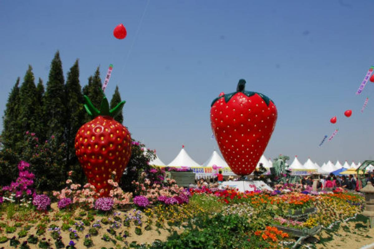 Kim's Travel Festival des Fraises de Nonsan