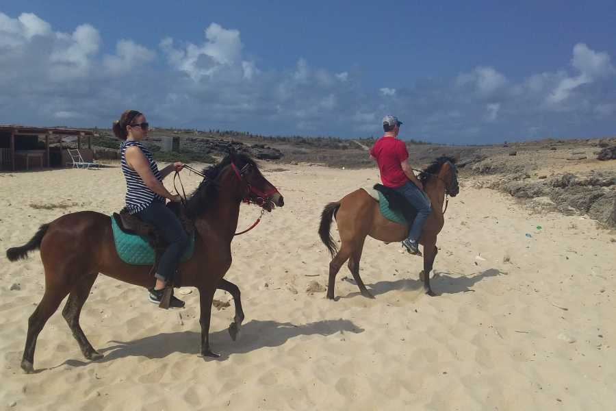 I-land Aruba Tours Sunrise Surf Horseback ride