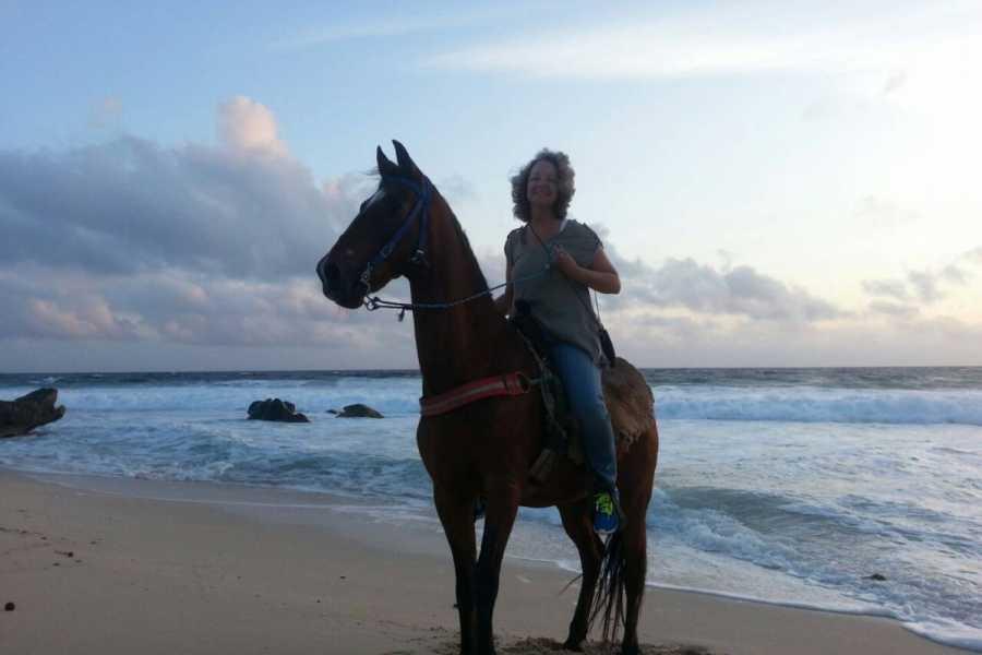 I-land Aruba Tours Sunset Vista Horseback Ride