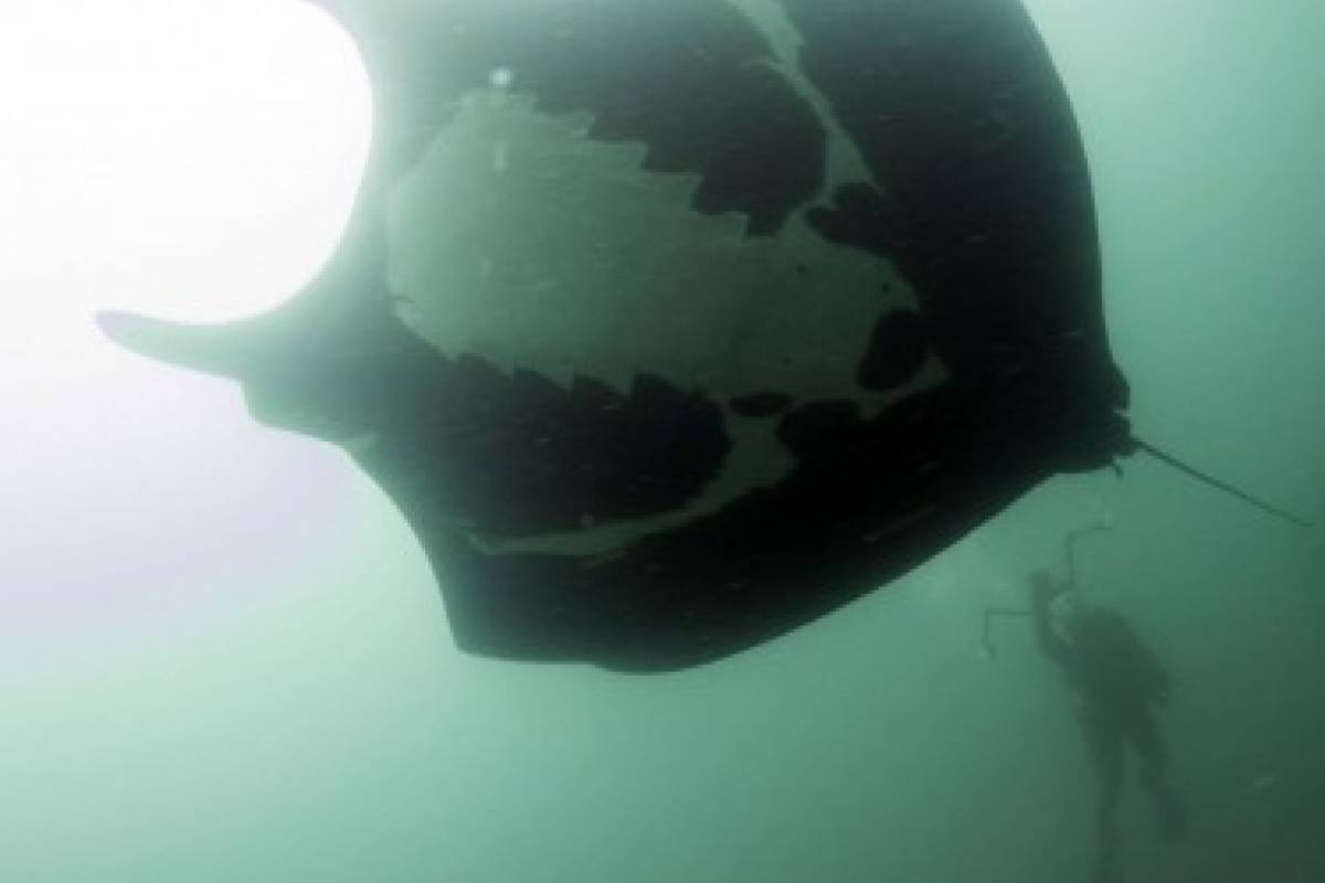 Go Montanita Fun Dive: Isla de la Plata Dive (With license)