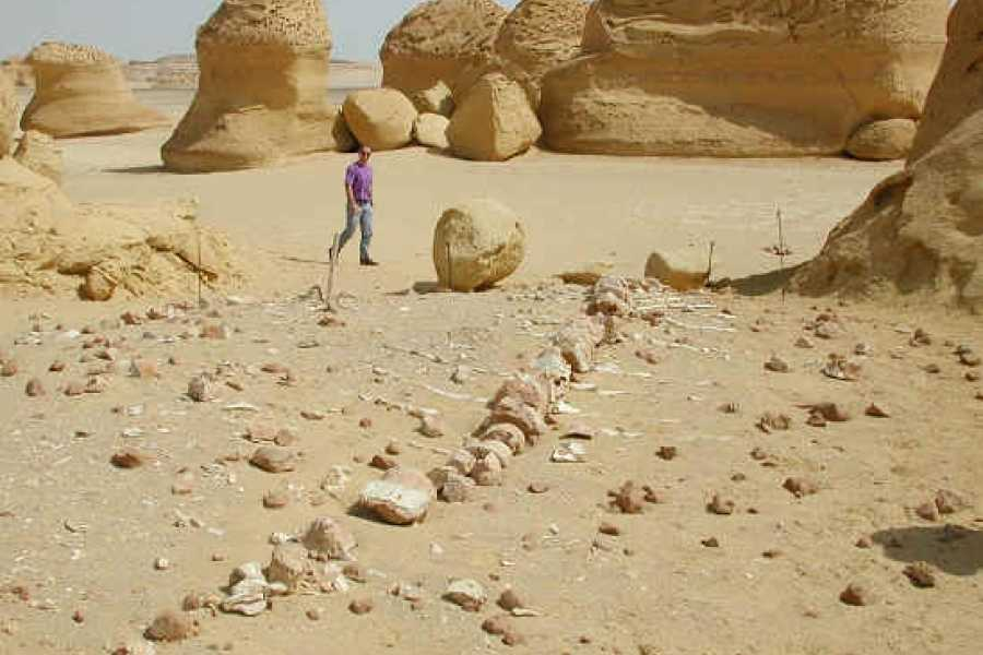 EMO TOURS EGYPT Tour to Whales Valley and Wadi El Rayan Waterfalls in El Fayoum from Cairo
