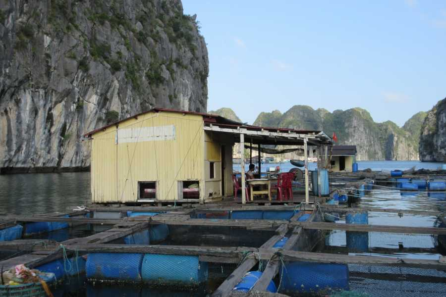 Friends Travel Vietnam The Real Halong Bay Private Cruise Experience 4D3N | Option A