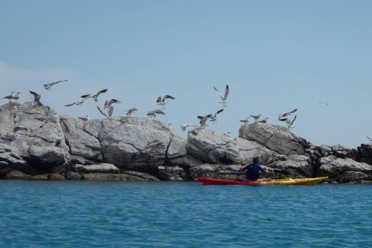 Iris Adventures Croatia Sea + river kayaking Split