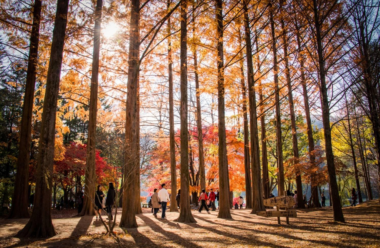 Korea Tour With Kids ND Kims Travel - Korea tour