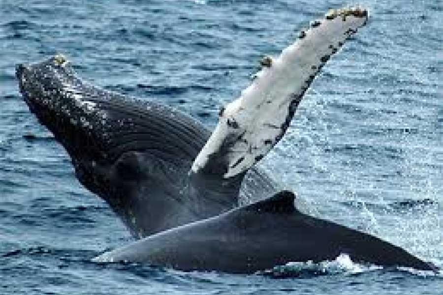 Go Montanita Whale Watching Tour