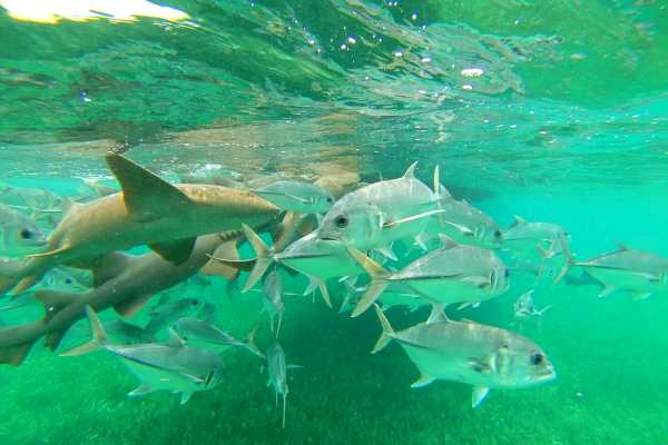 1/2 Day Snorkel and Sail to Hol Chan Marine Park and Shark Ray Alley or Mexico Rocks
