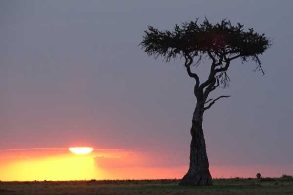 15-Day Kenyan Round Trip Safari Tour from Nairobi