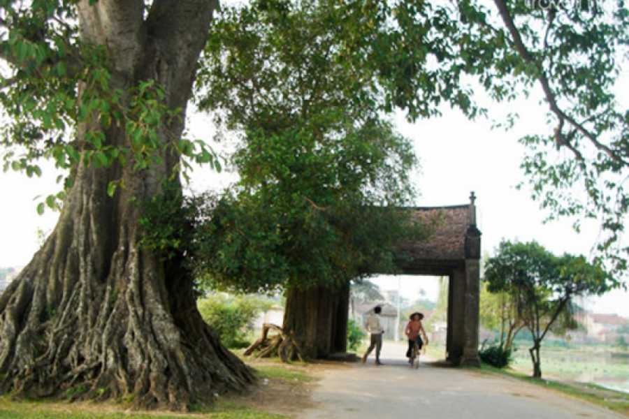 Vietnam 24h Tour Duong Lam Village Full day Tour