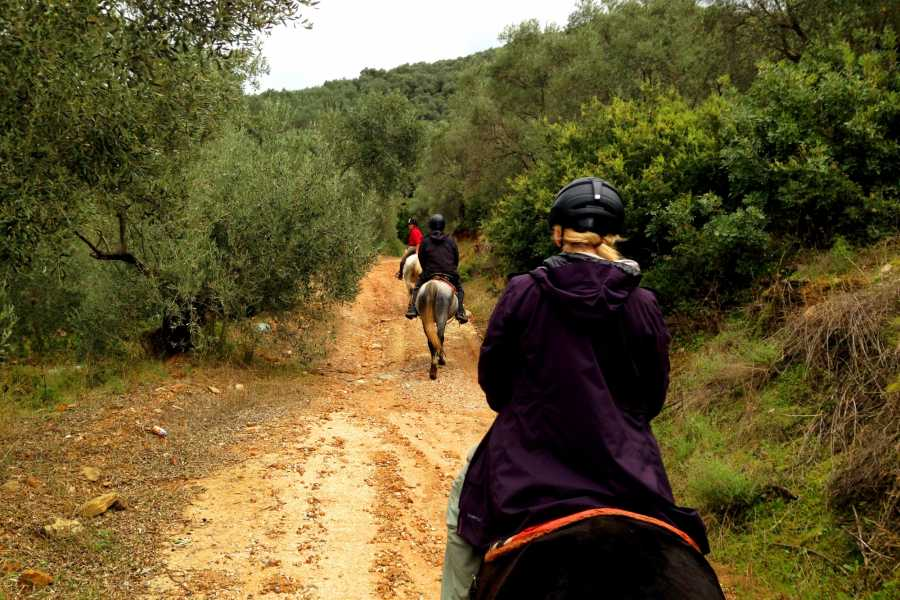 Leventis 360 IKE Horse Riding