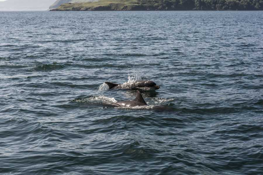 Ardnamurchan charters Whale Watching
