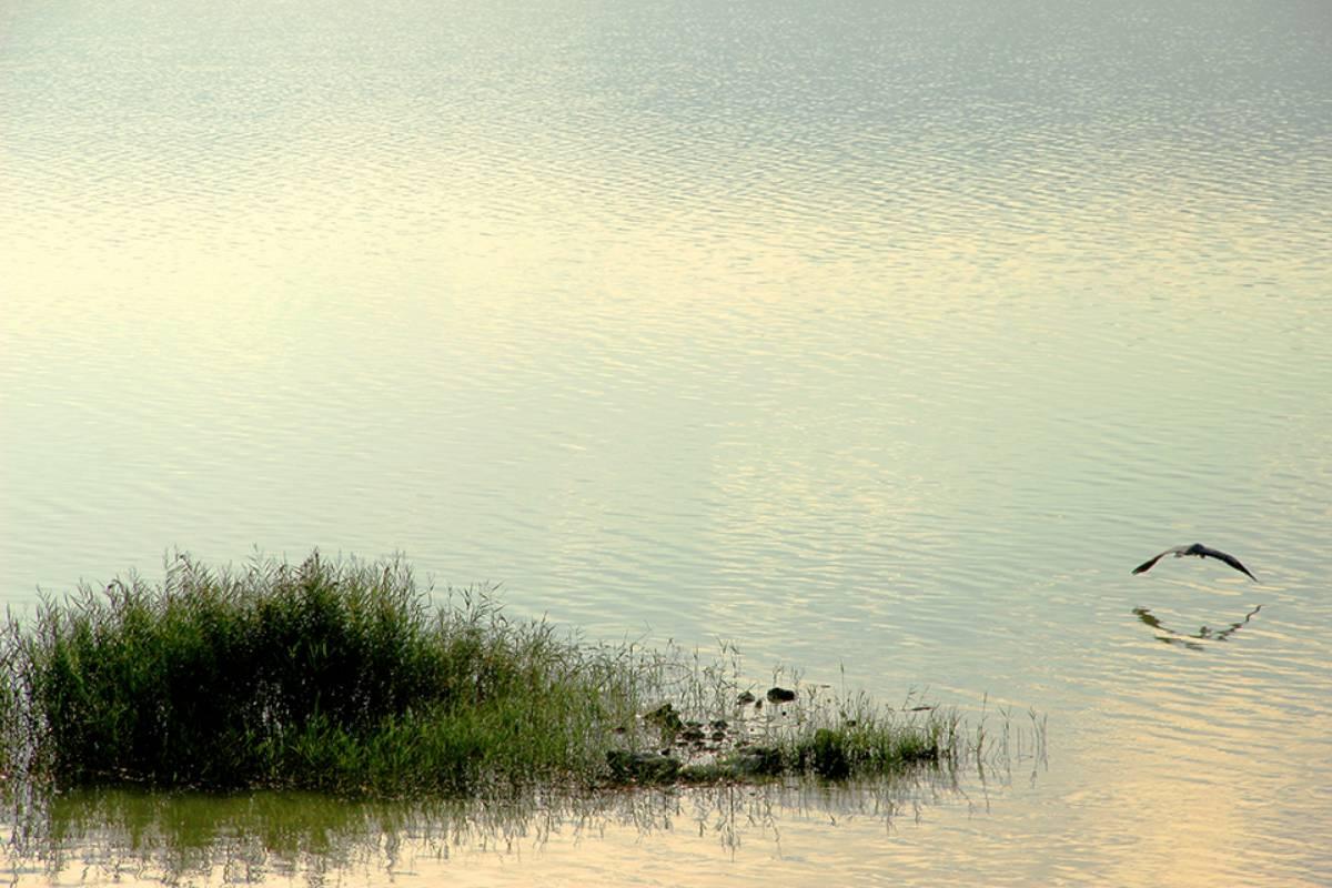 Les Hirondelles Ltd Bird watching in Karla Lake