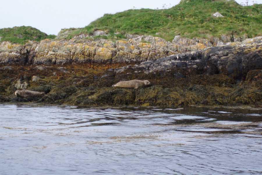 Ardnamurchan charters Tobermory Wildlife Cruise
