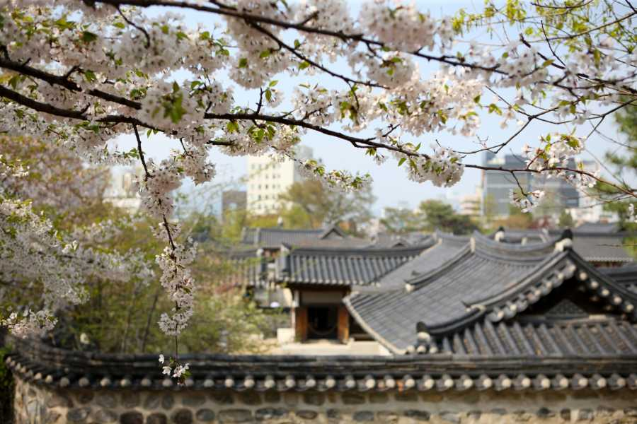 Kim's M & T ASME Turbo Expo 2016 Guest Tour-Seoul N Tower and Namsan Hanok Village Tour