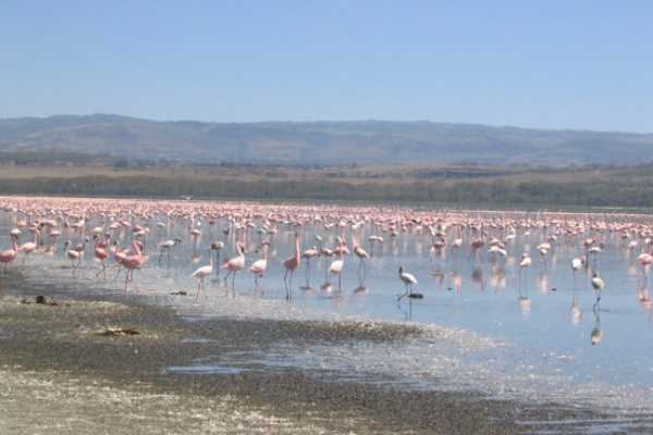 1Day Lake NaKuru  National Park Express