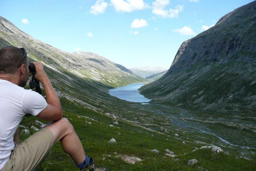 Contrast Adventure Norway Wild reindeer safari