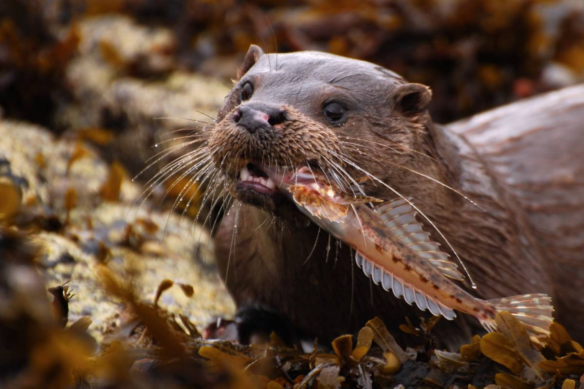 Ardnamurchan charters 2 Hour wildlife Cruise