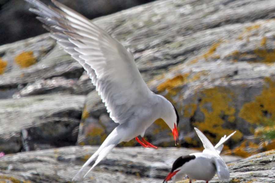 Ardnamurchan charters Wildlife Cruise