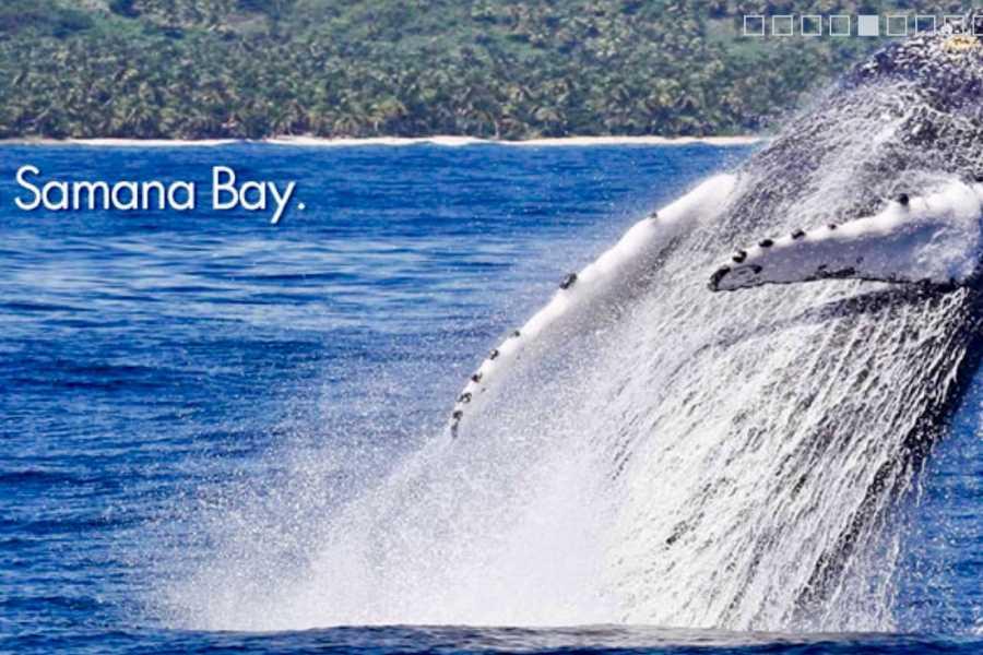Tour Samana With Terry Whales Punta Cana - Bavaro: Famous Kim Beddall of Whale Samana Whales+Cayo Levantado Island