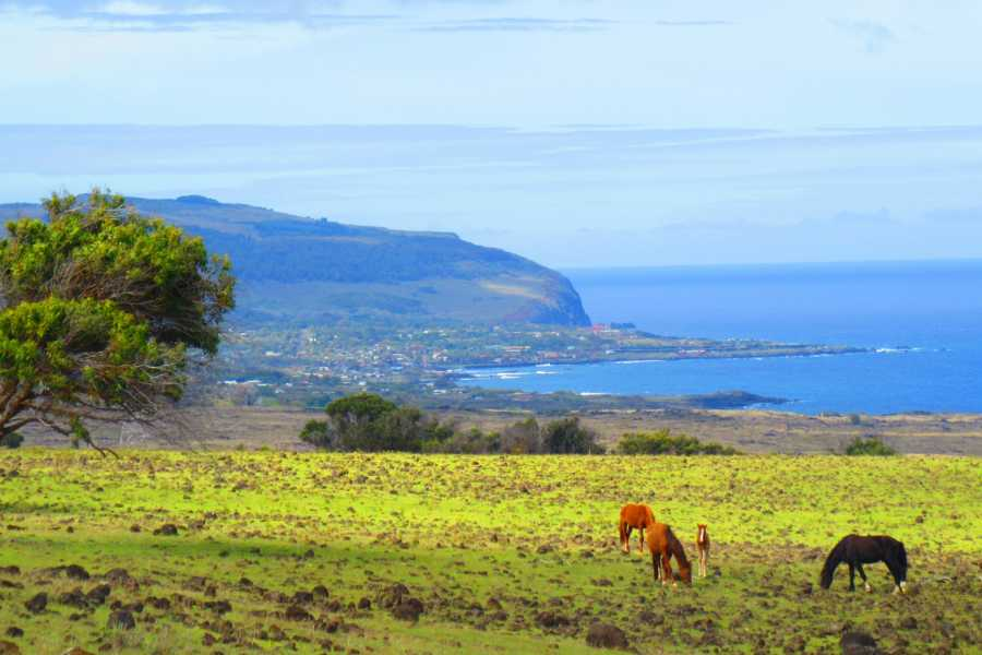 Green Island Tours - Easter Island Aventura en la Costa Norte