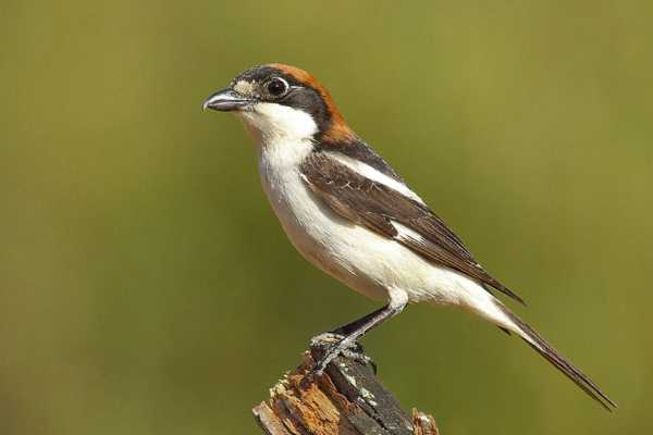 4x4 Tour - Birdwatching na herdade