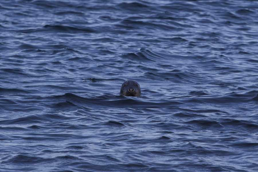 62Nord Wildlife Sea Safari