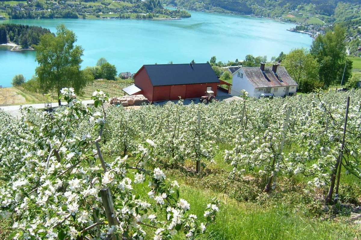 B-Nature A/S FJORD BOAT EXCURSION HALF DAY