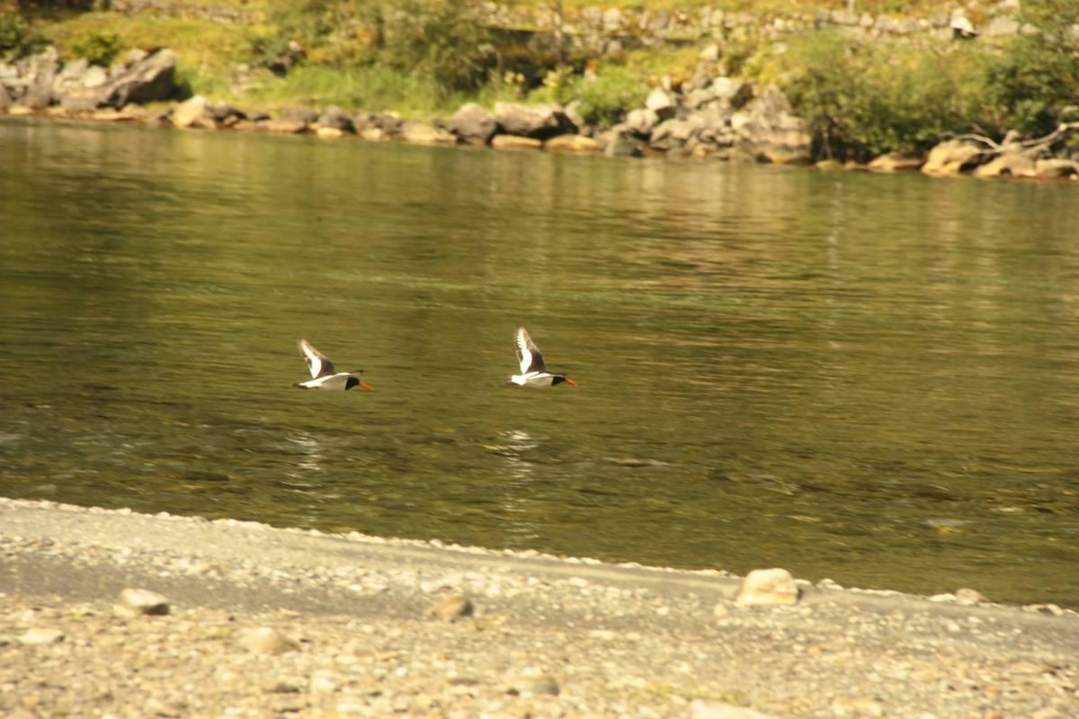 B-Nature A/S BIRD WATCHING