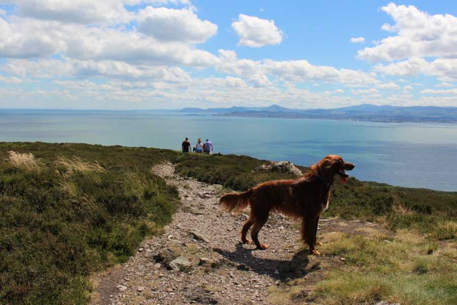 Shane's Howth Adventures 1. Howth Safari Hike