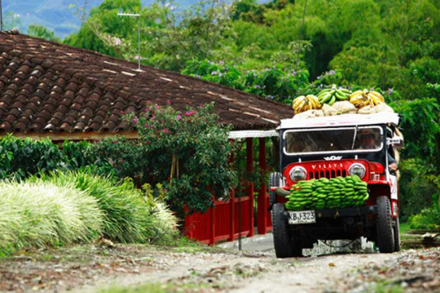 Medellin City Services Private Full-Day Coffee Tour to Palmitas Village from Medellin