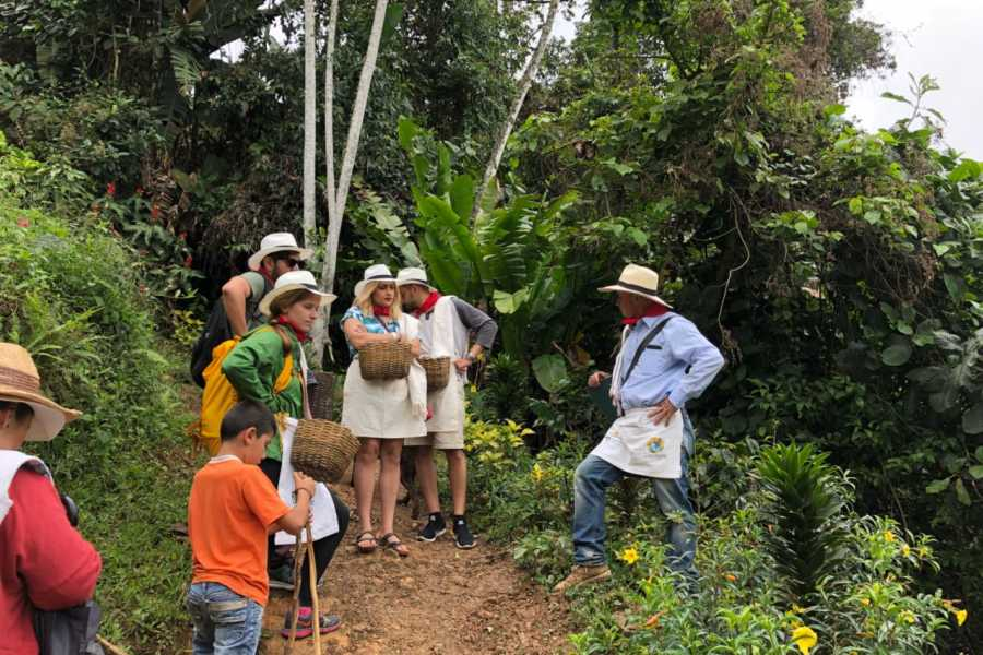 Medellin City Tours Private Full-Day Coffee Tour to Palmitas Village from Medellin