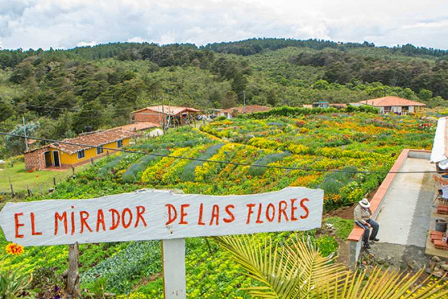 Medellin City Services Santa Elena Day Trip: Silleteros and Flower Farm Cultural Tour
