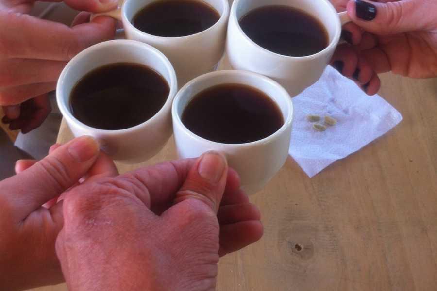 Medellin City Tours BoGo Tour:	BOOK COPACABANA EXPRESS COFFEE TOUR AND GET FREE FOOD TOUR