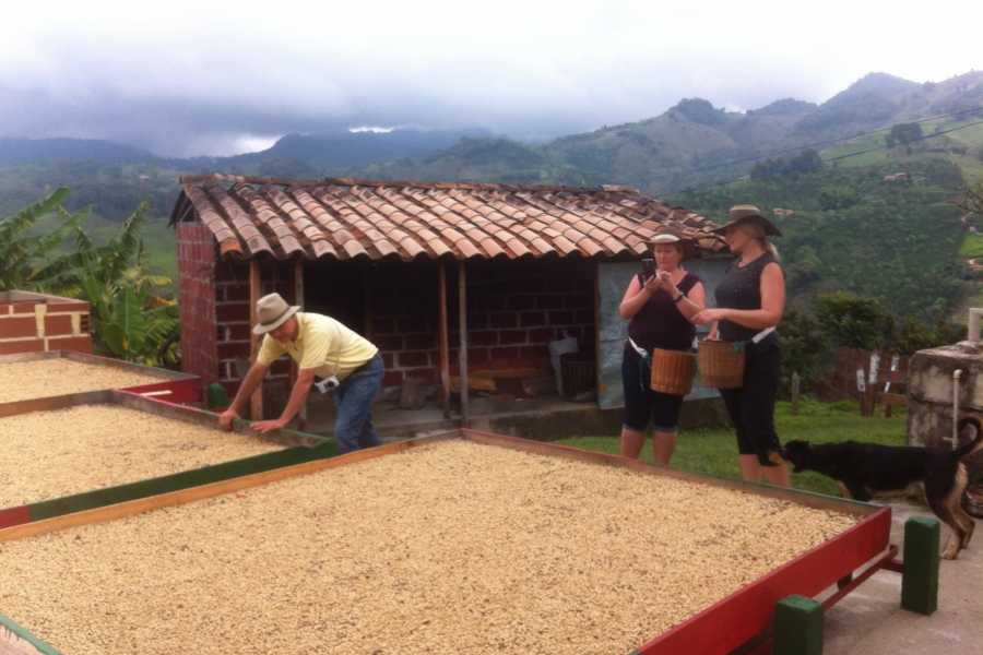 Medellin City Tours BoGo Tour: 	BOOK JERICO COFFEE TOUR AND GET A FREE FOOD TOUR