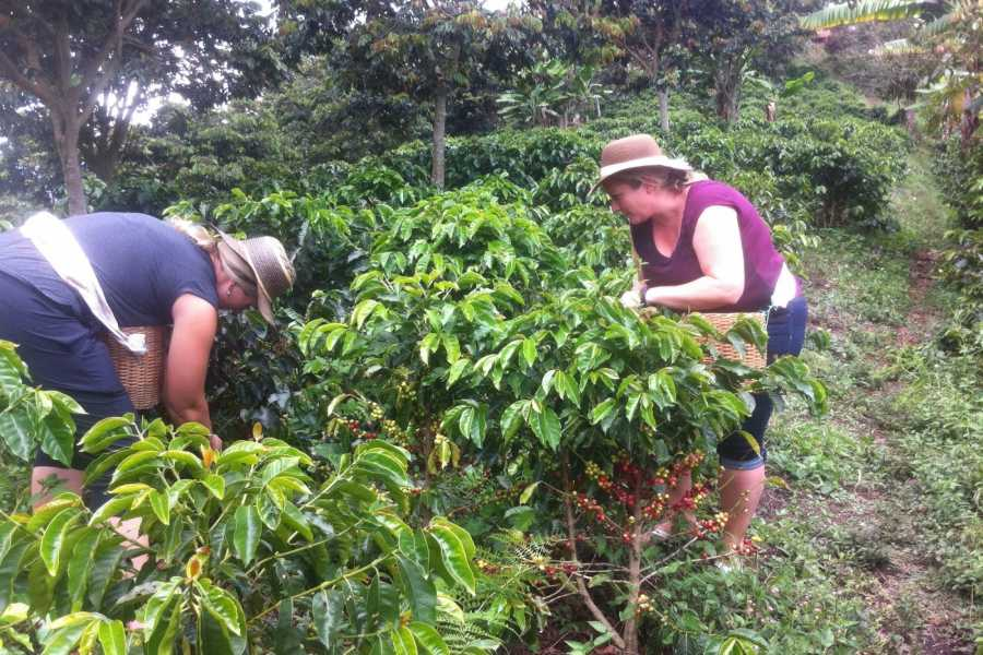 Medellin City Tours BoGo Tour: 	BOOK JERICO COFFEE TOUR AND GET A FREE SIGHTSEEING TOUR